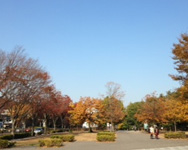 21世紀の森と広場(秋)