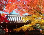 本土寺(北小金駅から徒歩14分)