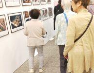 「天皇御即位 奉祝記念特別展」見学 2回目